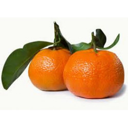 CLEMENTINE FEUILLE CORSE...